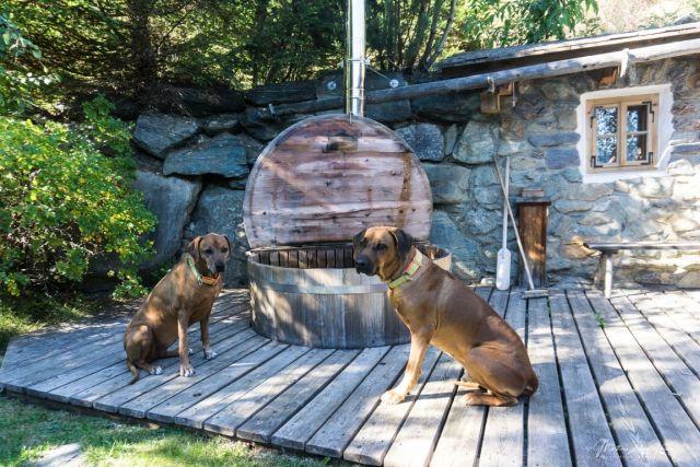 0794-04 Almdorf Seinerzeit Hunde auf Terrasse
