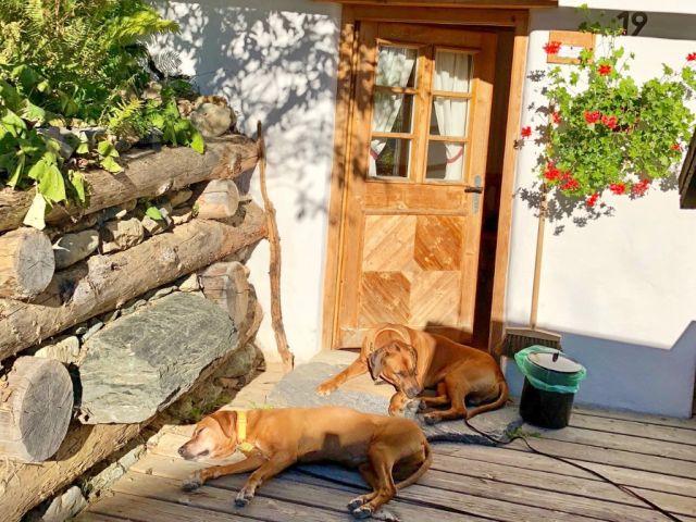 0794-05 Almdorf Seinerzeit Hunde bei Huette