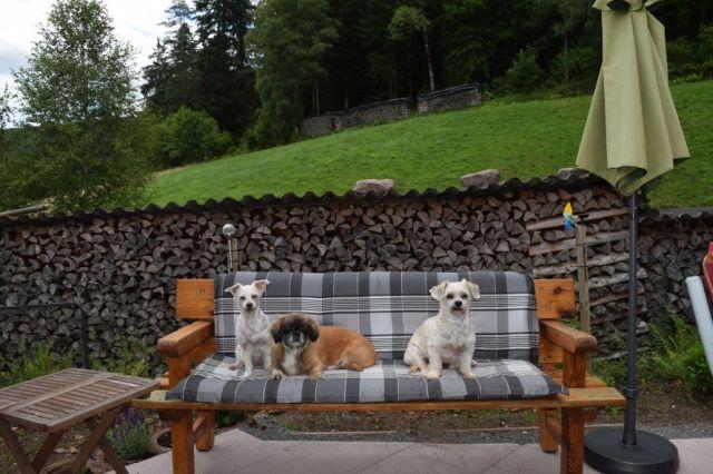 0796-04 Ferienwohnung Waldblick Hunde