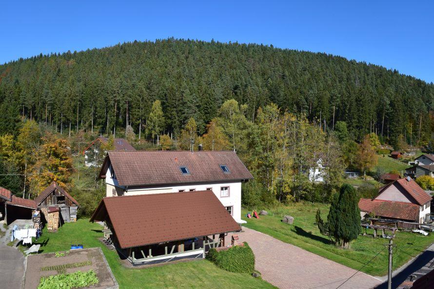 0796-14 Waldblick Umgebung