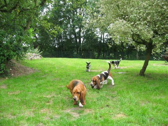 0805-05 Samaria Hunde im Garten