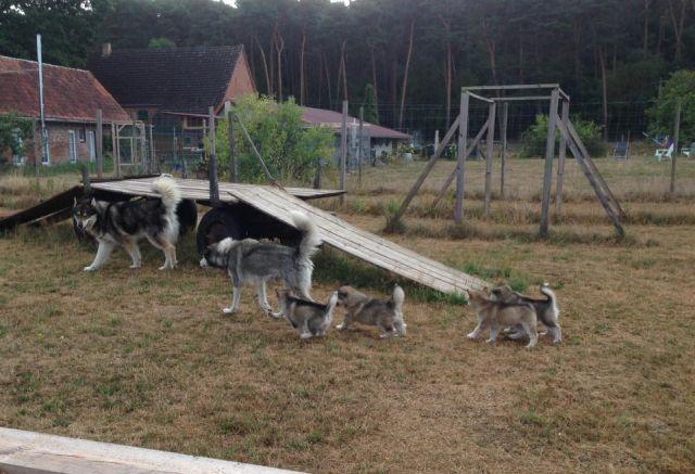 0808-05 Schnauzenhof Haushunde