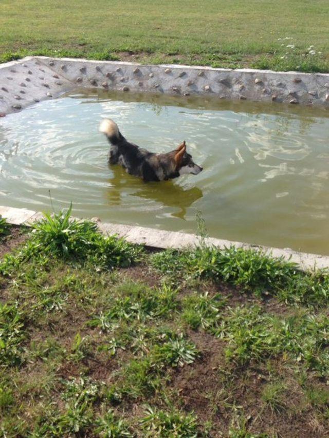 0808-06 Schnauzenhof Hundepool