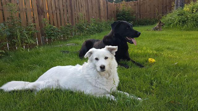 0809-03 Spunk Hunde im Garten