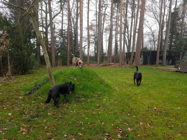 0809-13 Wald-Spunk Hunde im Garten