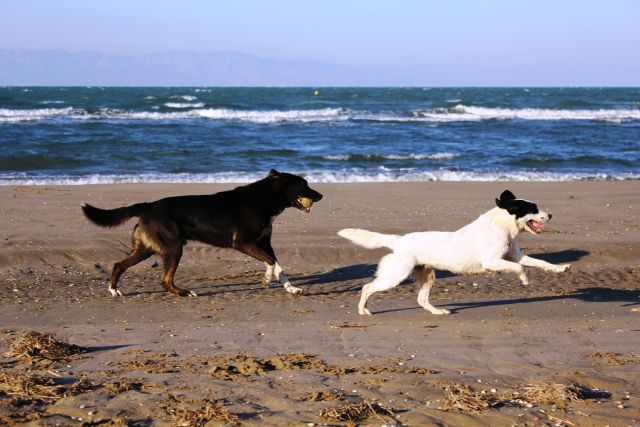 0825-10 Feha Nati Hunde am Strand