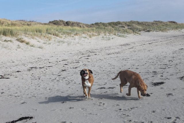 0830-03 Chalet Julia Hunde am Strand