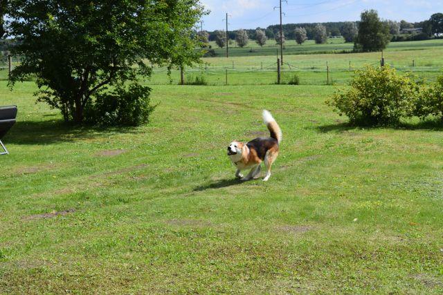 0837-03 FeHa Roggentin Hund im garten
