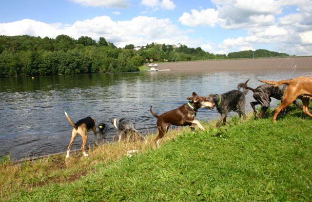 0859-28 Allebuesch Hunde 1