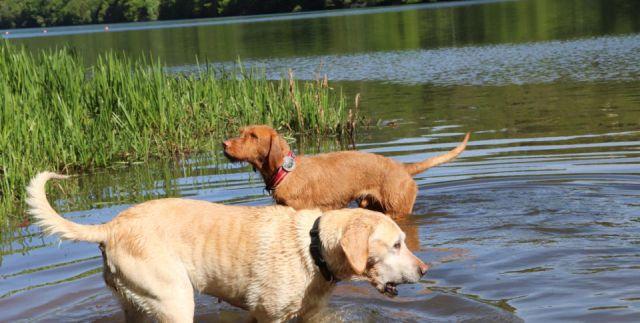 0859-30 Allebuesch Hunde 3