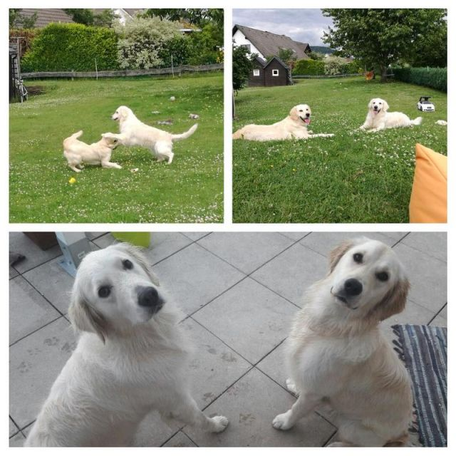 0865-05 Landhaus Schlossberg Hunde im Garten 1