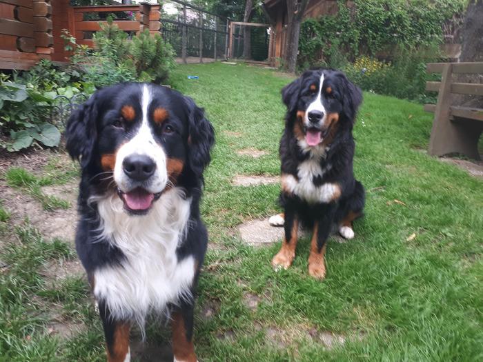 0871-06 FeWo Harmonie Hunde im Garten