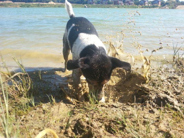 0872-02 Geesthof Hund am Hundestrand