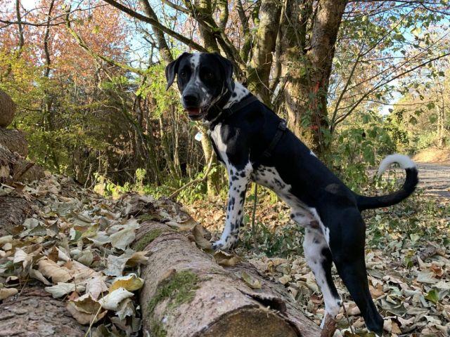 0867-08 Kleines Jagdhaus Hund im Garten