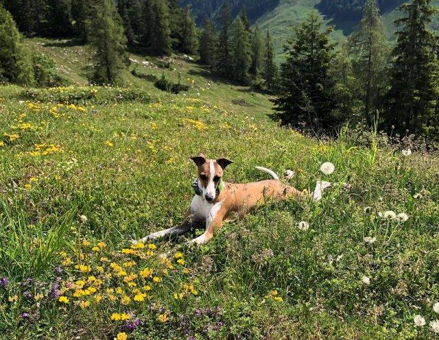 0892-04-FeWo Waidring-Hund im Garten