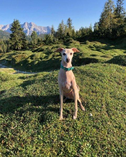 0892-05-FeWo Waidring-Hund im Garten