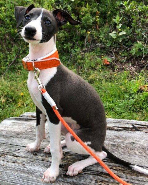 0892-06-FeWo Waidring-Hund im Garten