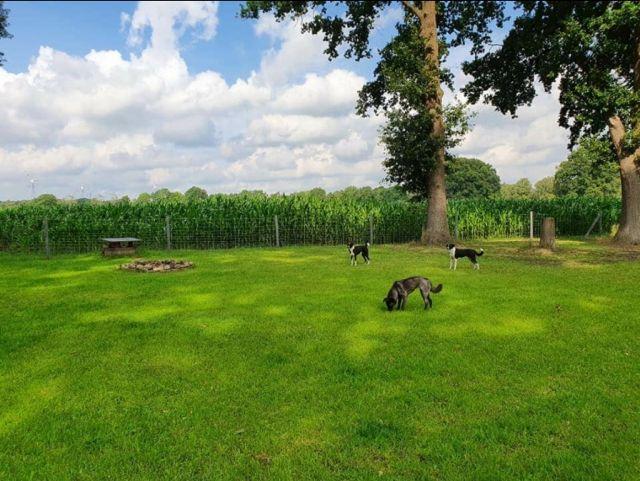 0903-06 FeHa Ballmann Garten mit Hunden