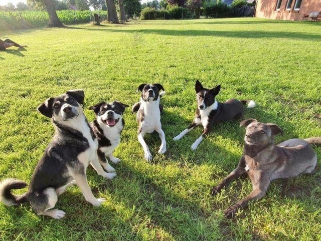 0903-07 FeHa Ballmann Hunde im Garten